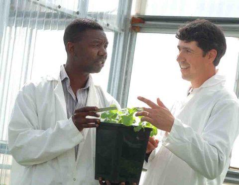 Nutriterra-human-nutrition-scientists-in-canola-greenhouse